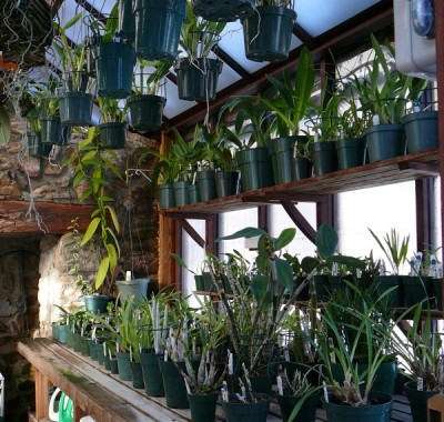Interior of the historic cook house greenhouse