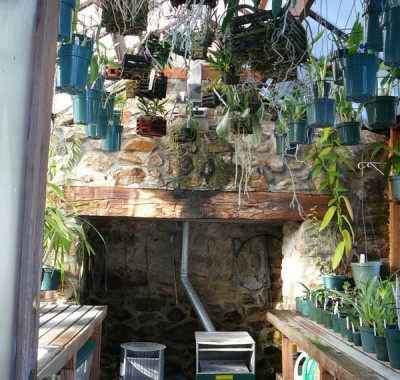 Attached Greenhouse interior with orchids