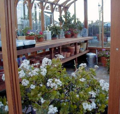Double tier wood greenhouse benches