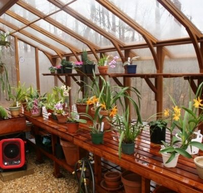 Tall redwood and glass greenhouse with orchids