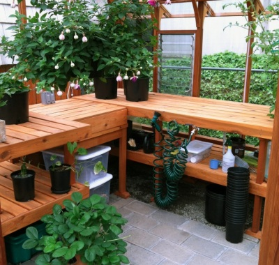 Greenhouse interior with double tier benches