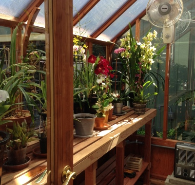 Trillium Greenhouse with orchids