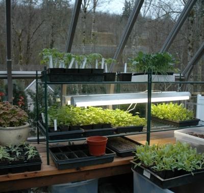 Greenhouse shelving in custom greenhouse