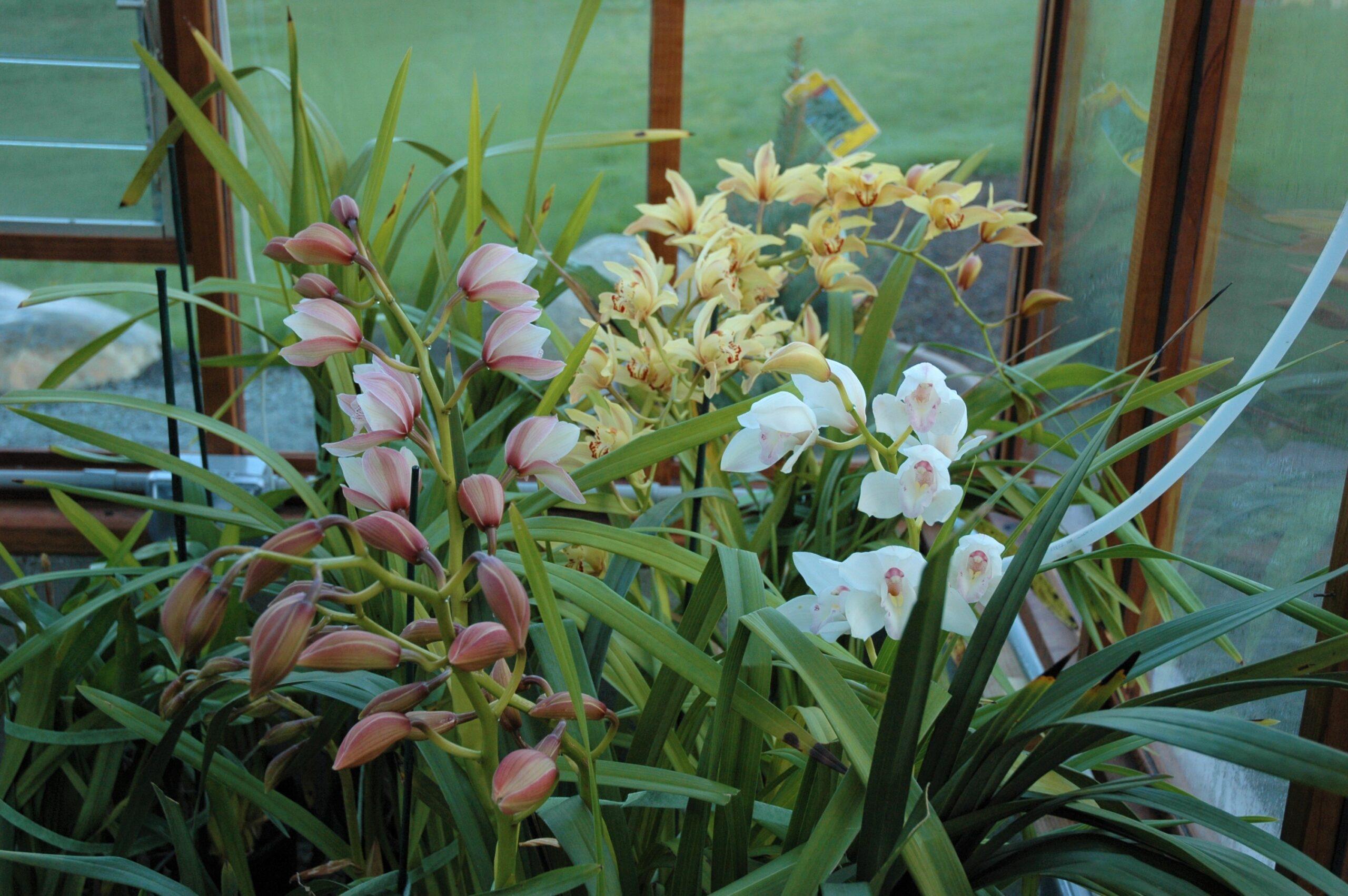 Orchid Greenhouse Sturdi-Built